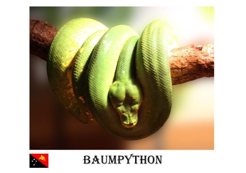 BaumPython-2