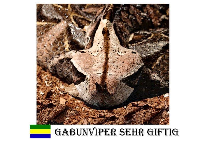 Gabunviper