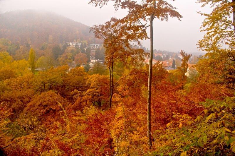 Harz Mountains IMG_4452_pp-1