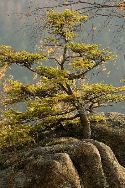 IMG_2422-2 Tree im Harz