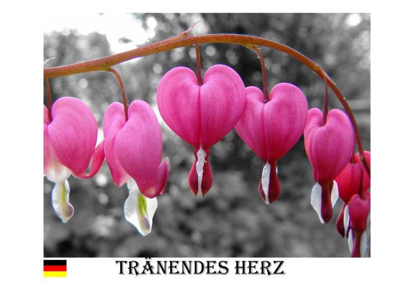 Traendes Herz 2006-1
