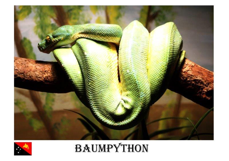 x-BaumPython