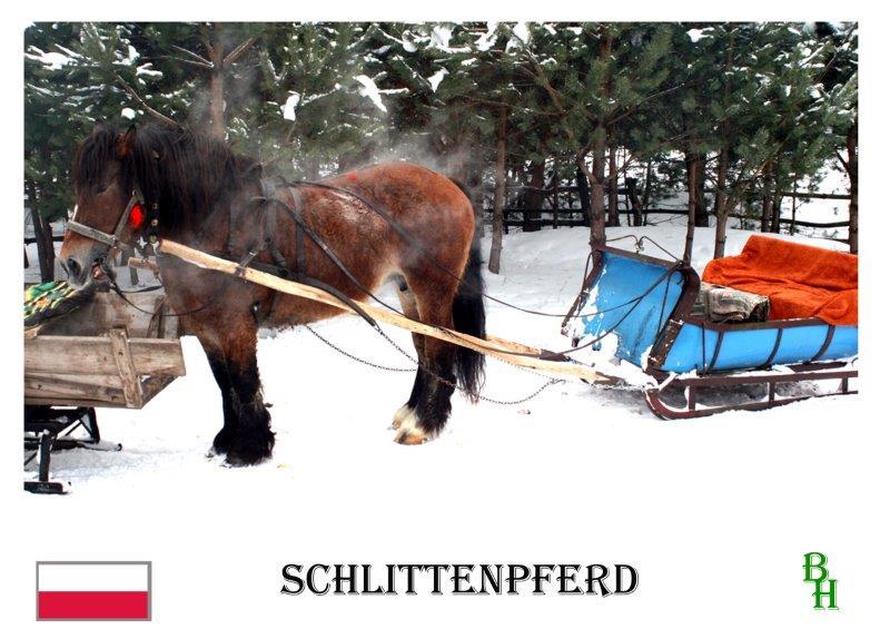 x-Schlittenpferd-4