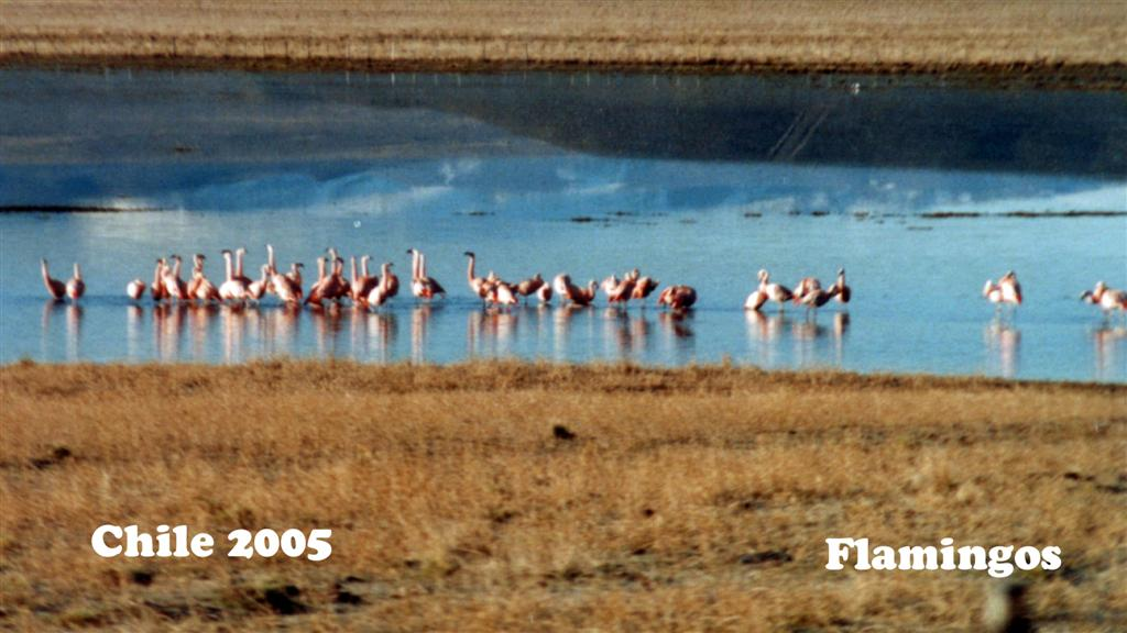 747036-31 Chile Flamingos Pan-American 2005 16x9 (Large)