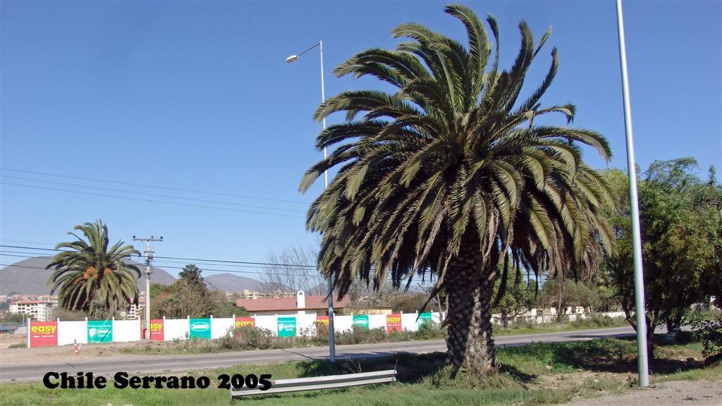 DSC01465-1 Chile Serrano 2005 16x9 (Large)