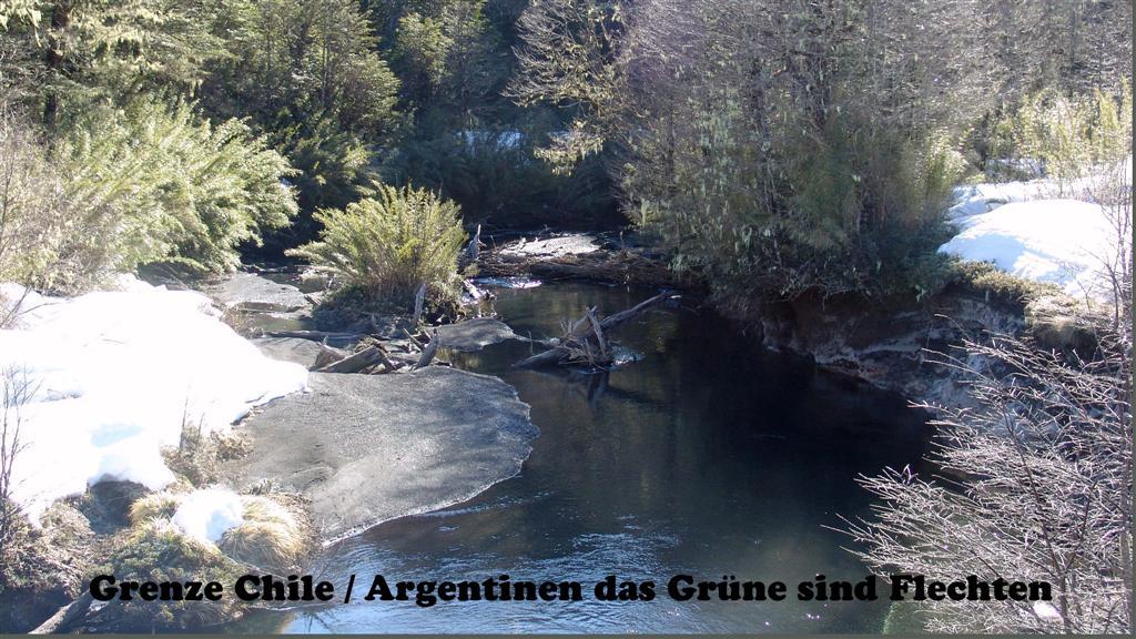 DSC01815-1 Grenze Chile Argentinen Flechten 16x9 (Large)
